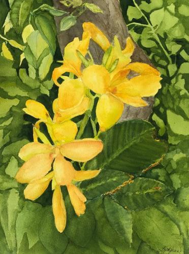 Yellow Canna